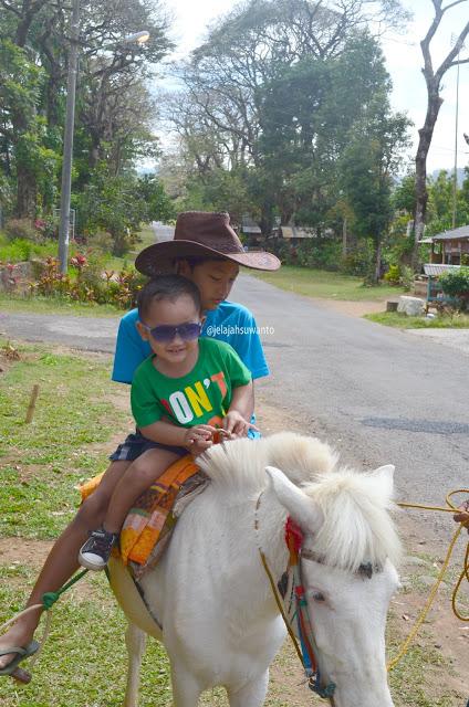 Sewa kuda di kawasan penginapan Malino