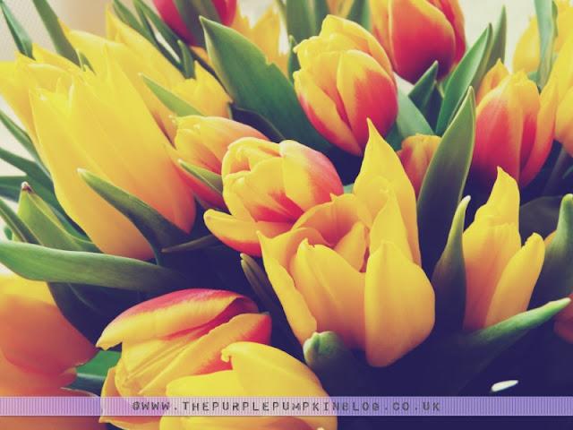 Yellow #Tulips