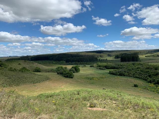 A foto mostra uma linda paisagem dos pampas gaúcho. Este bioma natural precisa ser preservado  porque continua a ser devastado através da fúria dos fazendeiros os senhores gananciosos da agroindústria da soja, milho, feijão e pecuária para exportação.