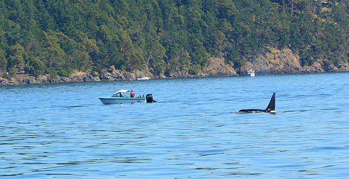 Avistamiento de orcas