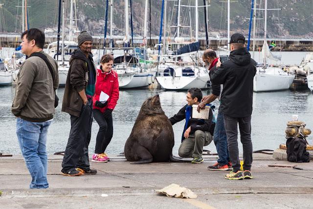 Turistas haciéndose fotos con un león marino en Hout Bay, Península del Cabo, Sudáfrica