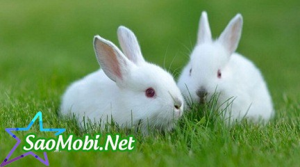 Nằm Ngủ Mơ Thấy Con Thỏ Là Điềm Báo Gì? Hên Hay Xui?