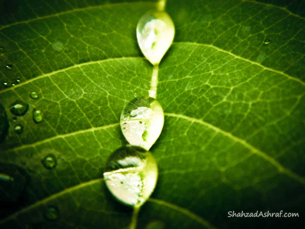 water droplets on Leaves after Rain shower