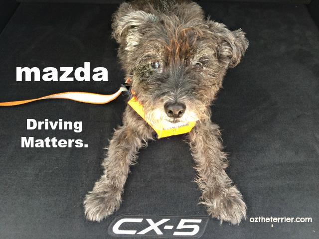 Drive Mazda. Driving Matters.