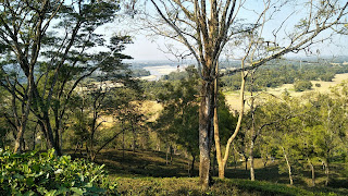 View from Tipam hilltop