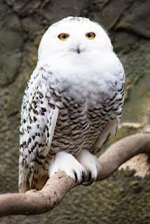 Harry Potter Owl All About Owl
