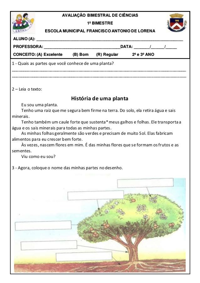 AVALIAÇÃO BIMESTRAL DE CIÊNCIAS 2º e 3º ANO - 1º BIMESTRE (PLANTAS).