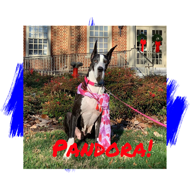 Great Dane Adoption