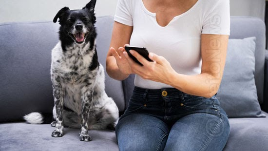demitida mulher cachorro patrao dinheiro recompensa