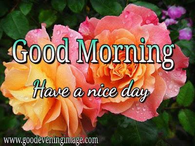 Good morning nature photos download