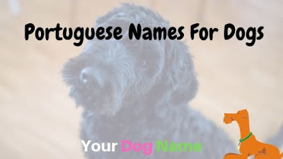 Portuguese Names For Dogs