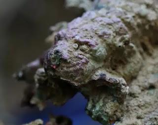 https://www.haaretz.com/archaeology/MAGAZINE-diving-archaeologists-find-lion-helmet-from-punic-wars-1.5626649