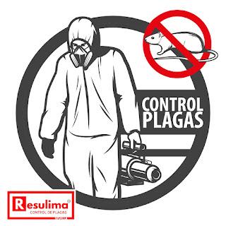 control roedores sevilla