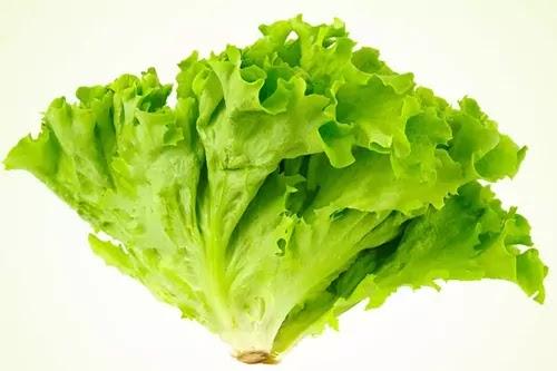 Locarno Leaf
