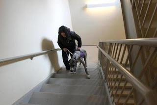 escadas para cães em apartamentos