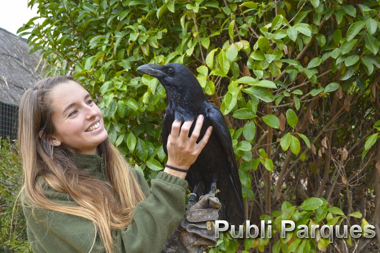 Cuervo con su cuidadora