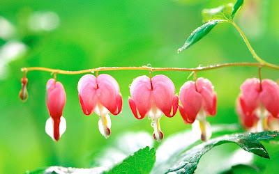beautiful-flowers-hd-wallpapers-beautiful-flowers
