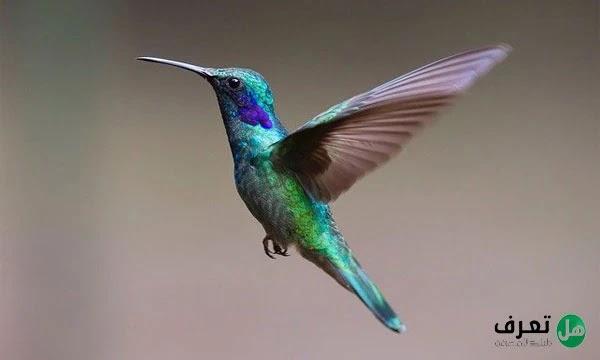 اجمل الطيور في العالم