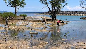 Jaga Ekosistim Lingkungan, PT BMW Tanam Ribuan Bibit Bakau  di Pantai Lokasi Hotel di Likupang
