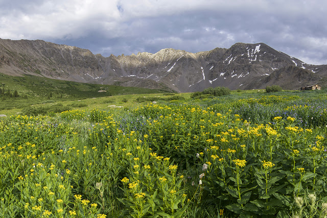 Wildflowers in Mayflower Gulch with Atlantic Peak and Fletcher Mountain