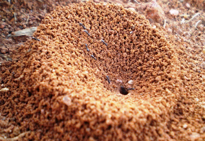 How To Get Rid Of Ant Hills In Yard Naturally | How To Get Rid Of Anything That Annoying You