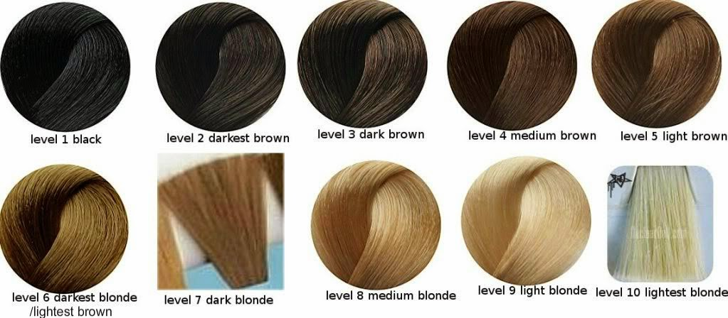 Level 6 Haircolor Wiki Of Level 6 Level 7 Hair Color ...