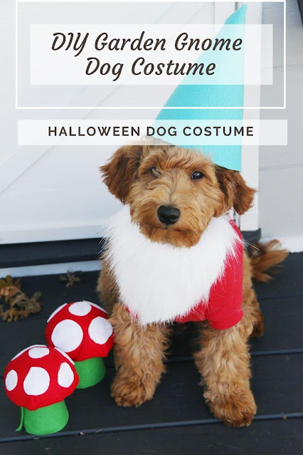DIY Garden Gnome Dog Costume