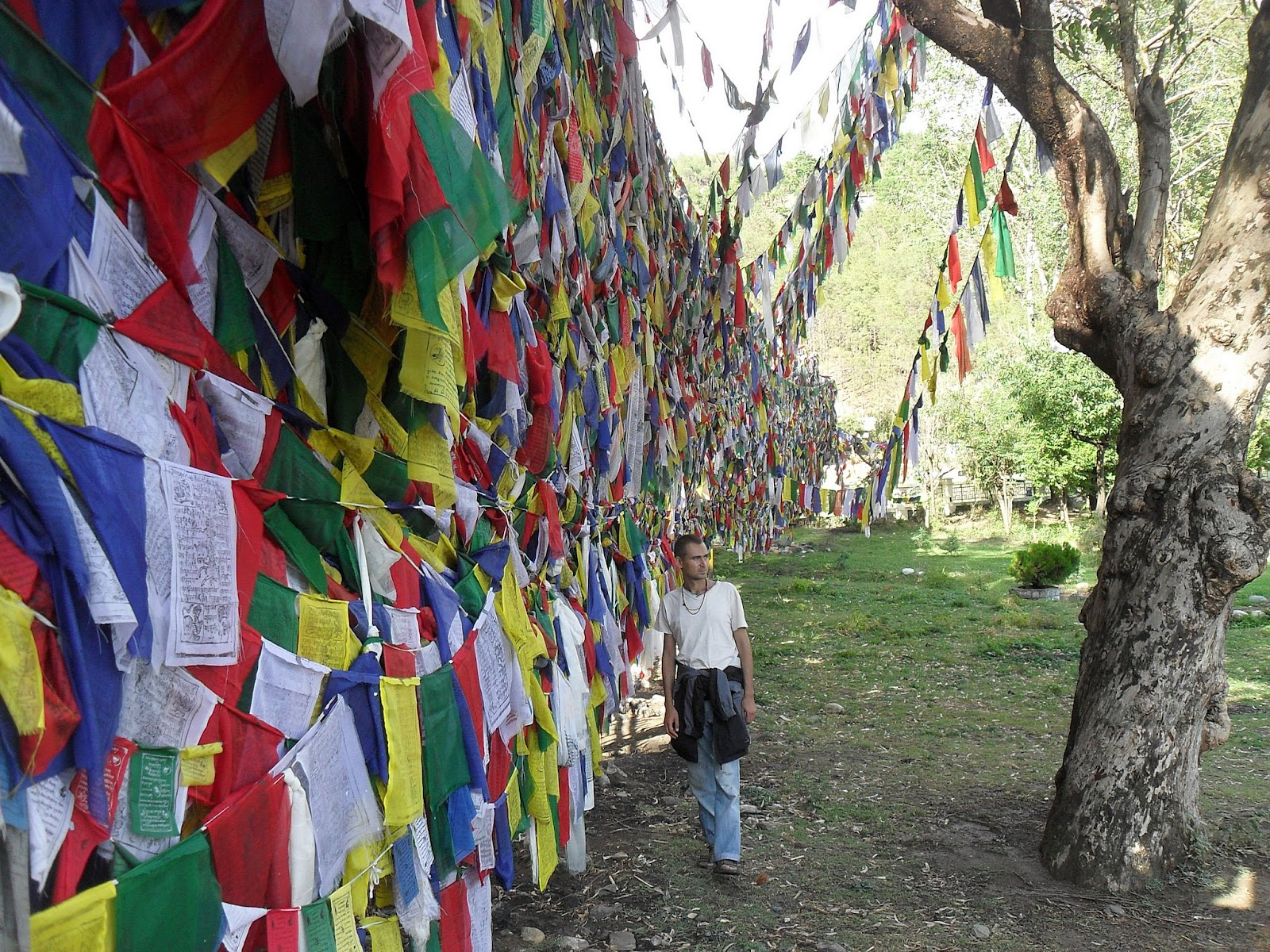 стена из тибетских флажков около озера Ревалсар