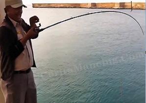 Mancing Casting Dapat Ebek Ikan Cermin Mantap