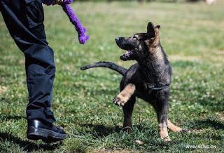 تفسير مشاهدة مهاجمة الكلاب في المنام