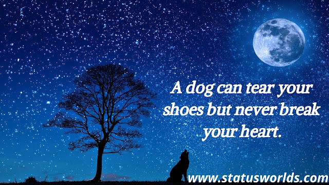 Dog Status And Quotes