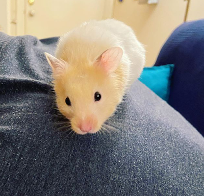 Is Hamster a Good Pet for Kids?