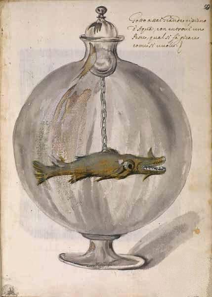 settala collezione wunderkammer ambrosiana