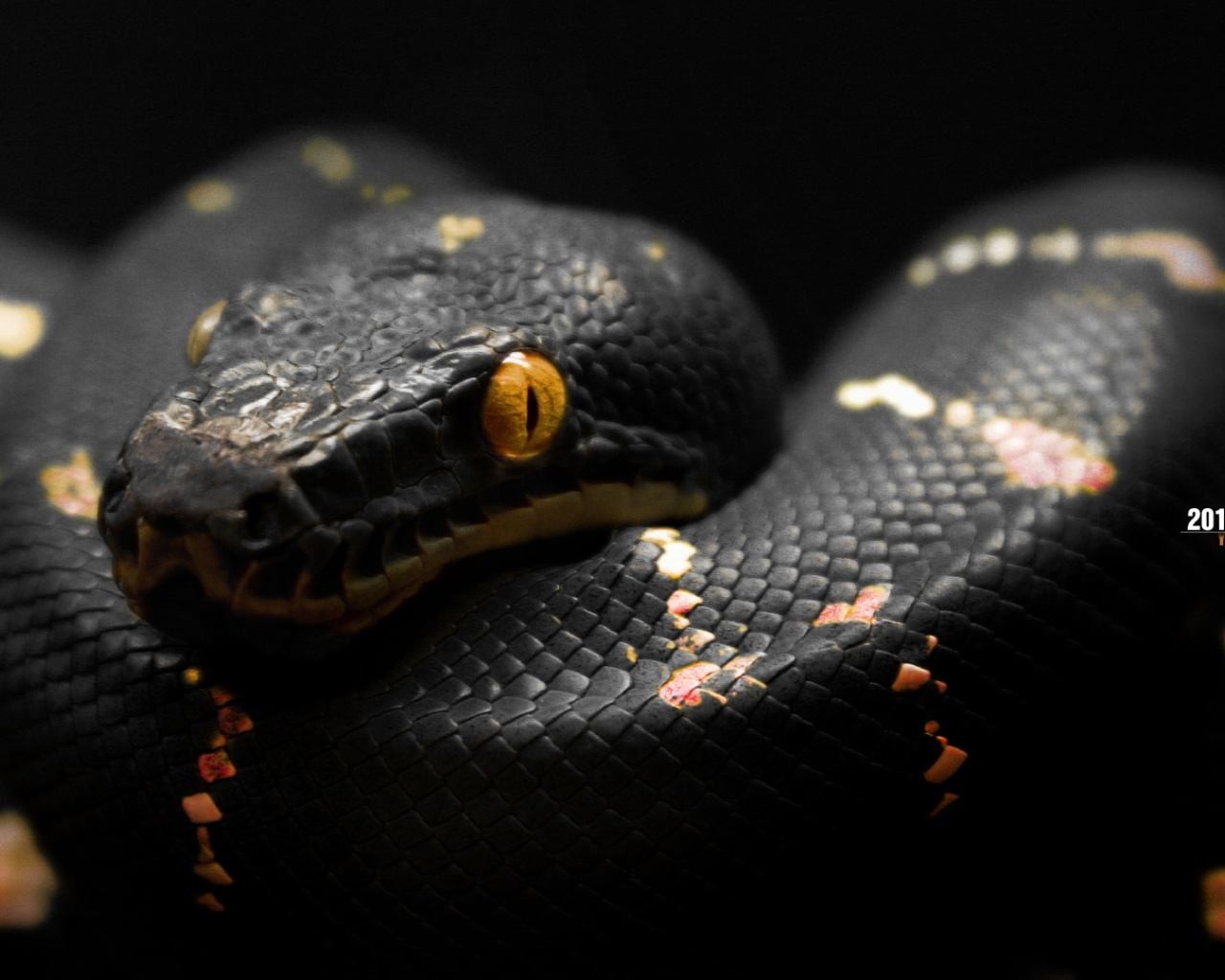 Snakes Hd Wallpapers Wallpaper202