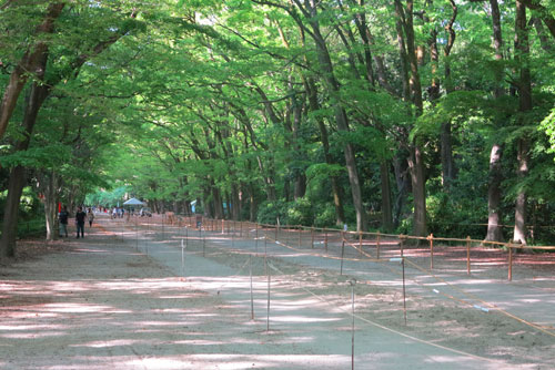 Grounds of Shimogamo Shrine, Kyoto.