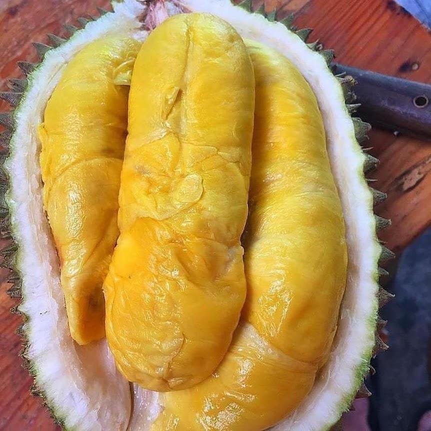 paket 4 bibit durian Montong bisa tabulampot Lubuklinggau