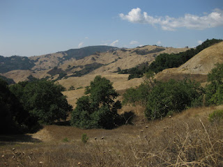 Golden hills studded with trees and chapparal, Santa Rosa Creek Road, east of Cambria, California