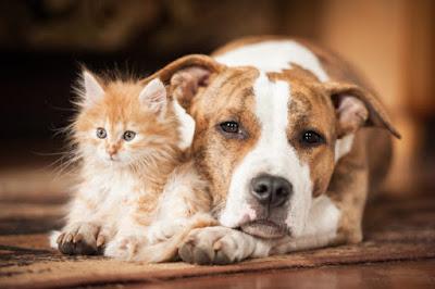 Post e shop per animali