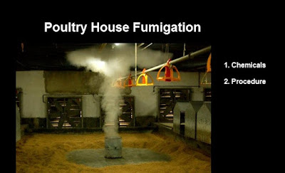 poultry house fumigation