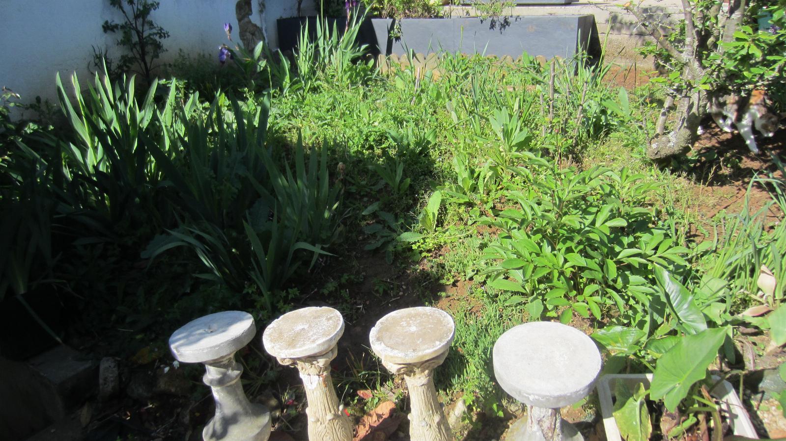 Planter Herbes Aromatiques Jardiniere matin lumineux: août 2019
