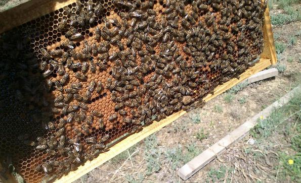 Πόσους γόνους πρέπει να έχουν τα μελισσια για να βγάλουν χειμώνα