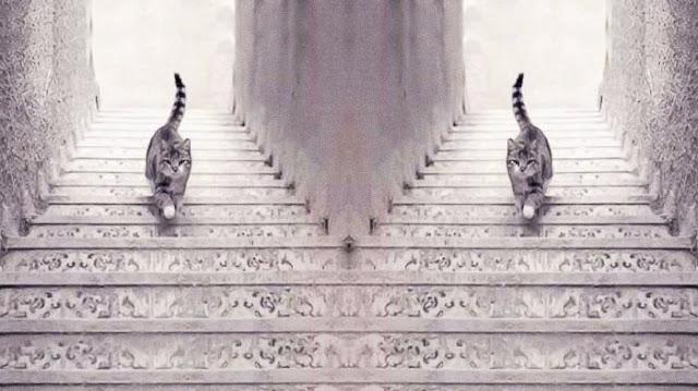 Travenusa.com-gambar kucing naik turun tangga