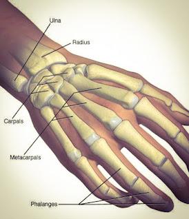 Bones In Hand