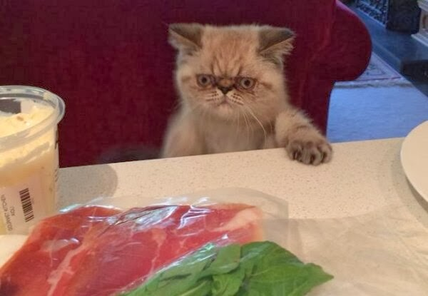 Funny cats - part 87 (40 pics + 10 gifs), cat looking at the meat on the table