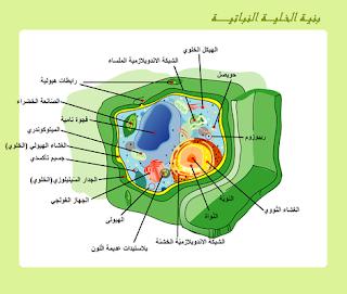 الخلية النباتية