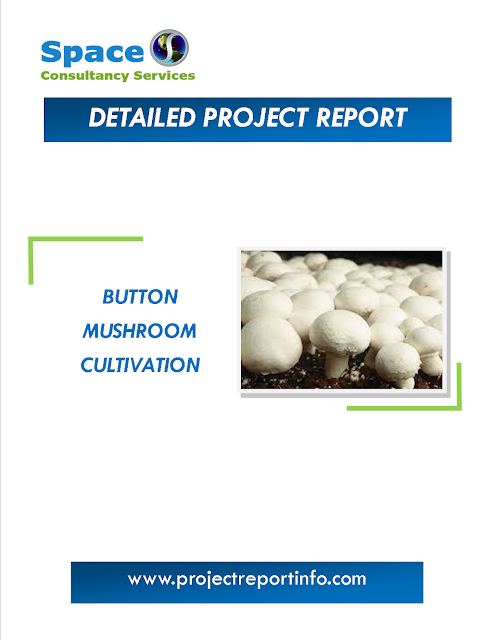 Project Report on Button Mushroom Cultivation
