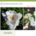 2 Aplicativos para identificar os nomes das plantas