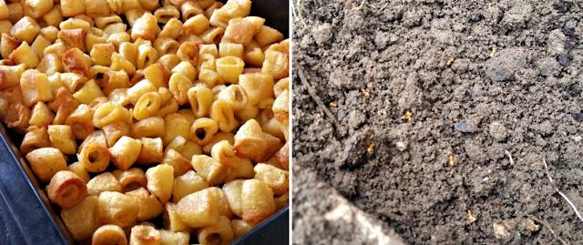 Hula hoop potato shapes and ants