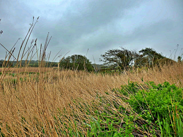 Marsh land at Bude, Cornwall