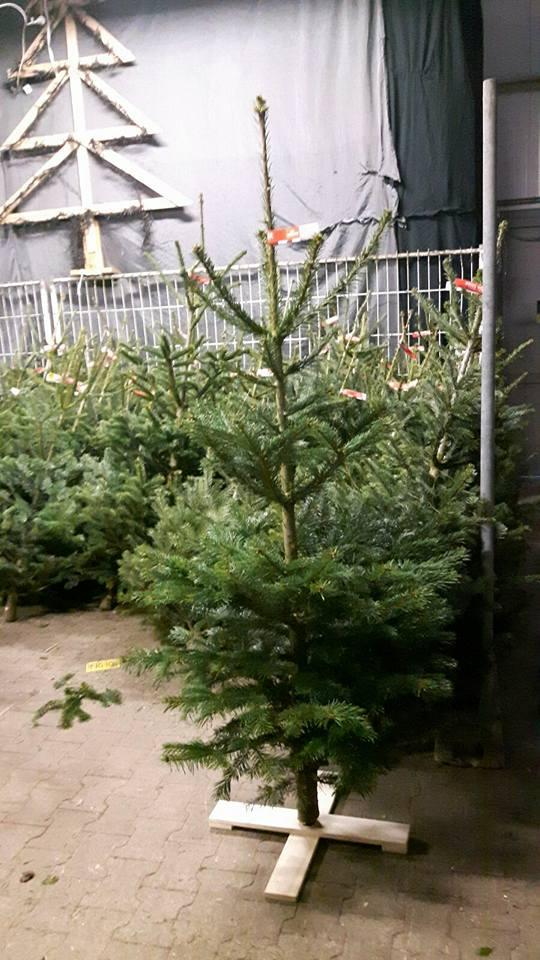 Peters Tuinadvies Kerstboom Op Een Kruis